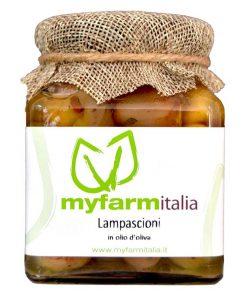 Lampascioni - Myfarmitalia Az. Agr. Siciliano
